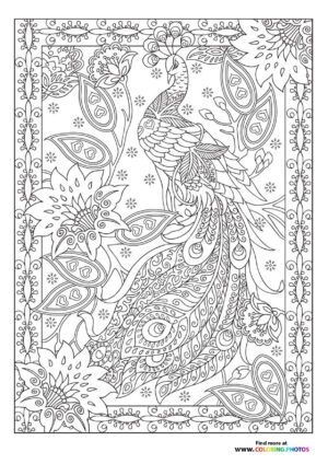 Peacock in flowers coloring page for adults