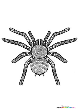 Spider coloring for adults